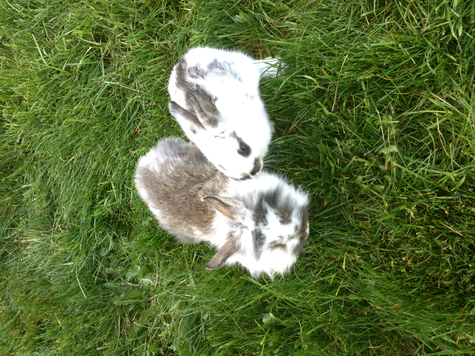 how to raise meat rabbits for free journey to sustainability