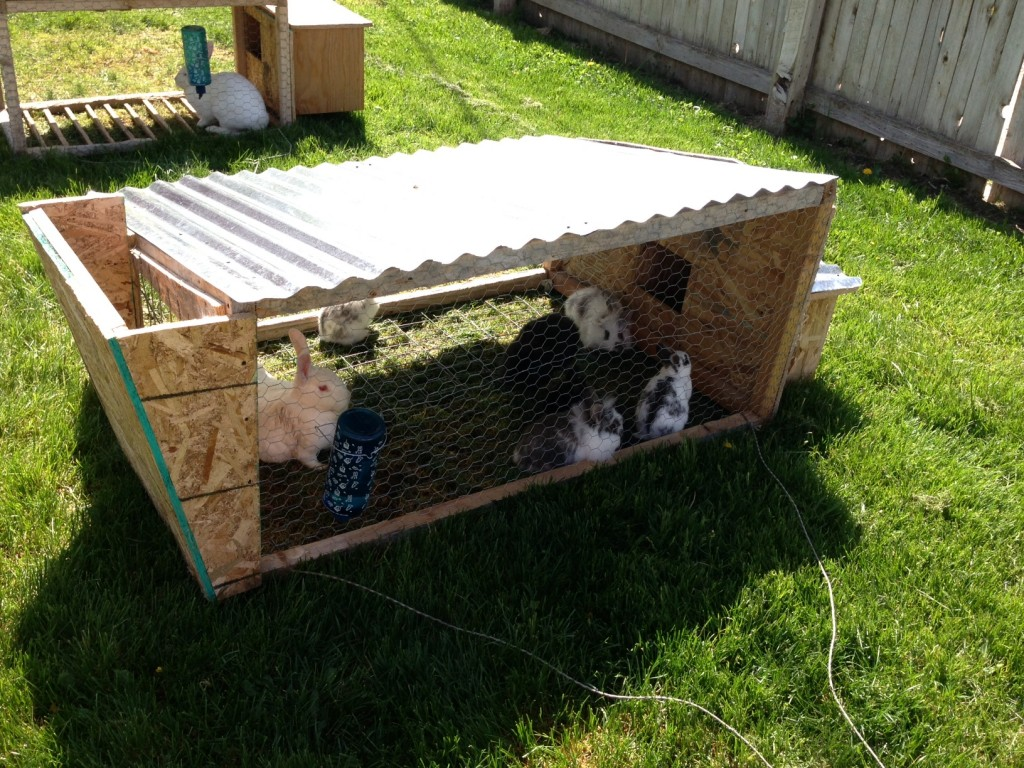 How To Raise Meat Rabbits For Free Journey Sustainability